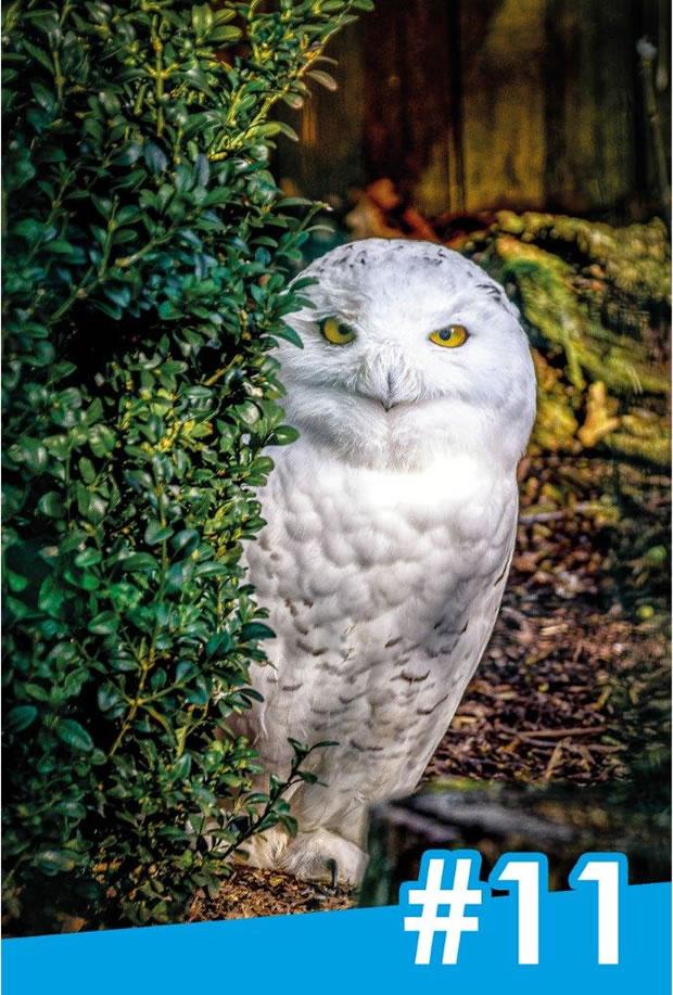 OecherDeal präsentiert Afterglow für den Tierpark Aachen