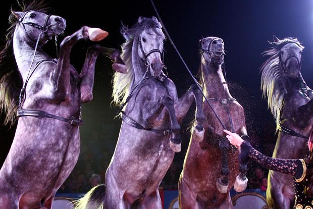 OecherDeal präsentiert den Circus Carl Busch